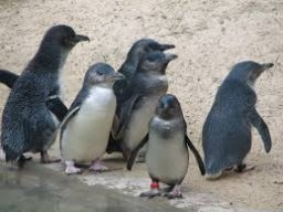 PvPPenguin